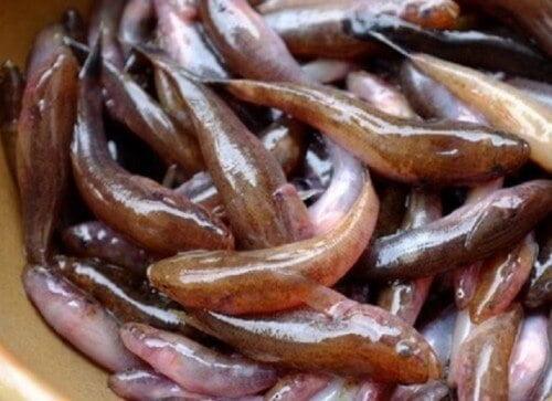 Sơ chế cá bống